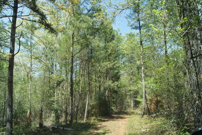 Residential Lots & Land For Sale: 70.96 Chamberlain Ferry Road