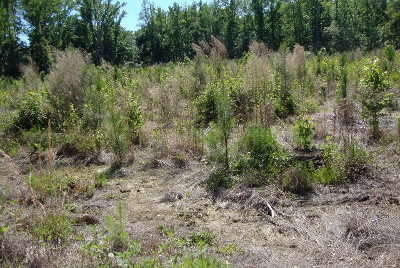 McDuffie County Residential Lots & Land For Sale: 10 Neal Mill Road