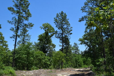 Residential Lots & Land For Sale: 32 Ac