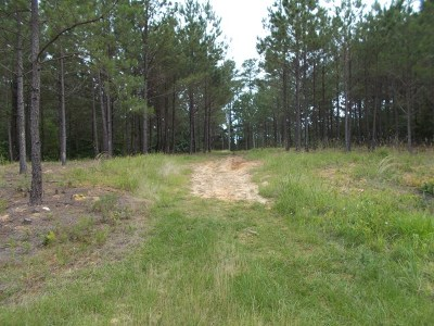 Residential Lots & Land For Sale: Lot 97