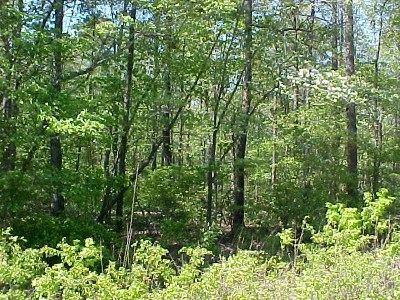 Lincoln County Residential Lots & Land For Sale: C & E Circle