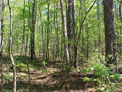 Lincoln County Residential Lots & Land For Sale: Lot 25c Lbk Road