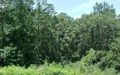 Residential Lots & Land For Sale: 608