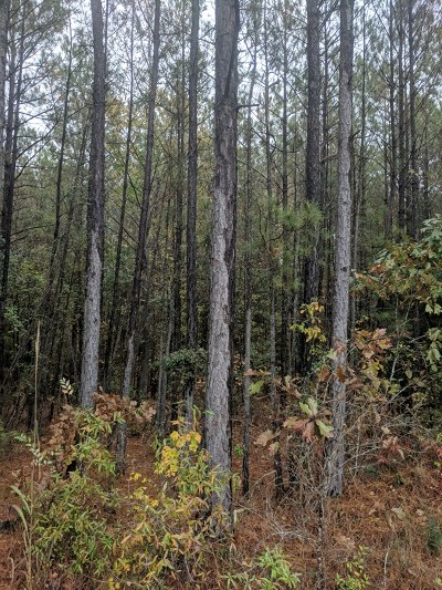 Lincoln County Residential Lots & Land For Sale: 1030 Clint Williams Road