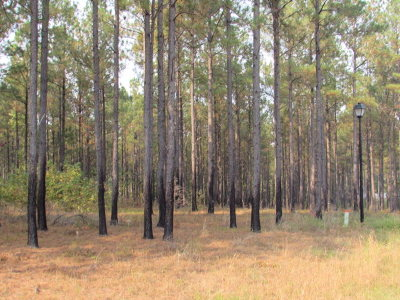 Lincolnton Residential Lots & Land For Sale: Lot 60 Maiden Cane Way