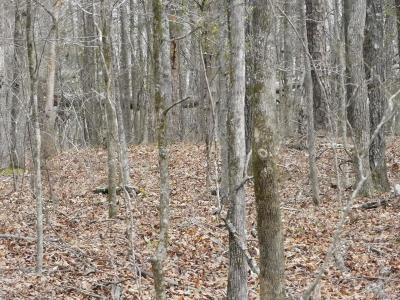 Lincolnton Residential Lots & Land For Sale: 1484 White Rock Road