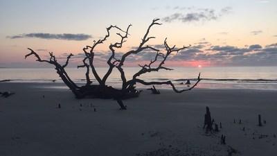Jekyll Island Single Family Home For Sale: 1175 N Beachview Dr #353