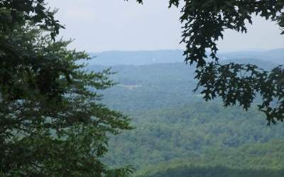 Ellijay Residential Lots & Land For Sale: Buena Vista Drive