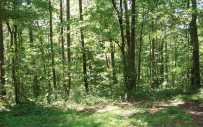 Ellijay Residential Lots & Land For Sale: Huron Court