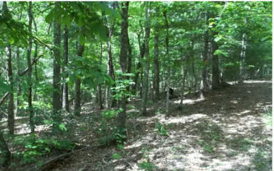 Blairsville Residential Lots & Land For Sale: Tr-D Lilac Lane