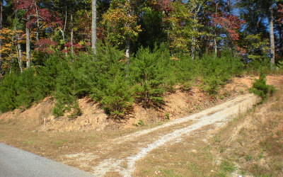 Ellijay Residential Lots & Land For Sale: Lot 2 Frances Drive