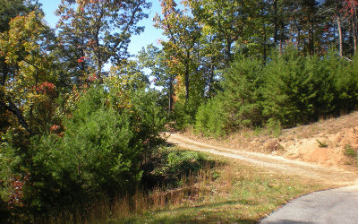 Ellijay Residential Lots & Land For Sale: Lot 7 Robert Drive