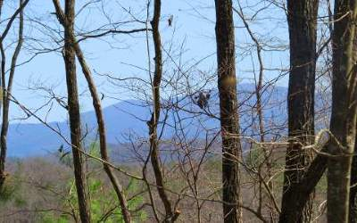 Ellijay Residential Lots & Land For Sale: Lot 6 New Hope Rd.