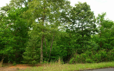 Fannin County Residential Lots & Land For Sale: Lot46 Ralston Gap Lot 46