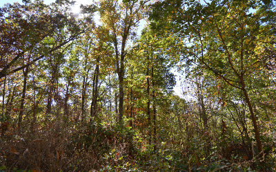 Young Harris Residential Lots & Land For Sale: Lot 8 Trails End