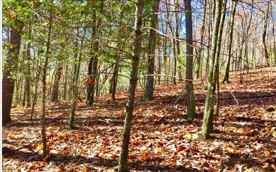 Ellijay Residential Lots & Land For Sale: Lt518 Cohutta Court