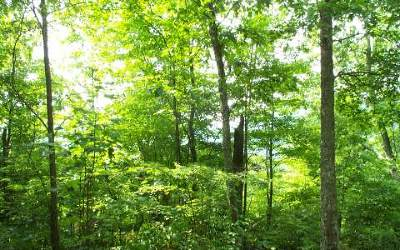 Residential Lots & Land For Sale: L-14 Deer Trace