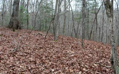 Fannin County Residential Lots & Land For Sale: Lot 4 Indian Trail