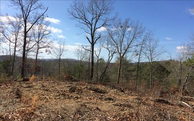 Ellijay Residential Lots & Land For Sale: 50 Ac Camp Branch Rd