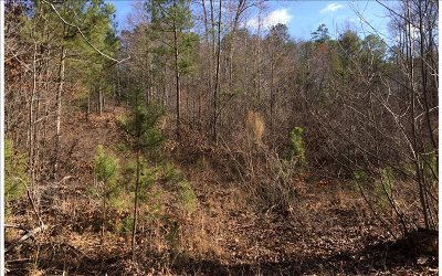 Ellijay Residential Lots & Land For Sale: Lt 8 Camp Branch