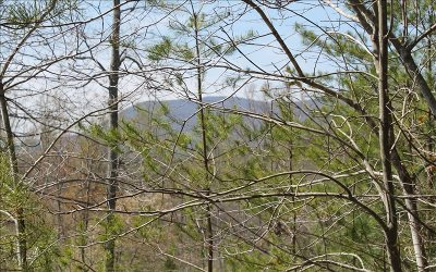 Ellijay Residential Lots & Land For Sale: East New Hope Road