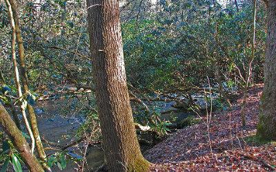 Blue Ridge Residential Lots & Land For Sale: Lt 12 Hemlock Trail