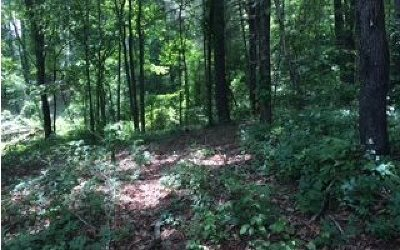 Hayesville Residential Lots & Land For Sale: Ledford Chapel