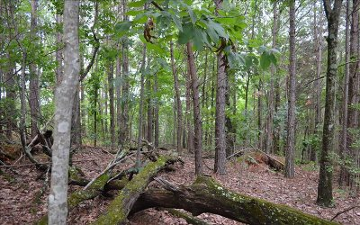 Jasper Residential Lots & Land For Sale: 01 Oak Morris Ridge