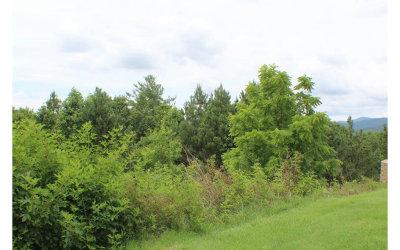 Ellijay Residential Lots & Land For Sale: Lot13 Ridgemont Drive
