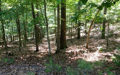 Ellijay Residential Lots & Land For Sale: Lot 5 Ophir Ct.