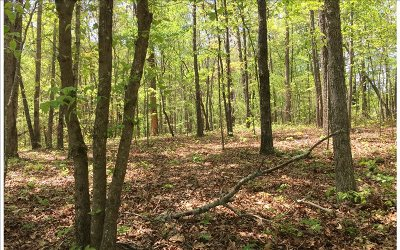 Ellijay Residential Lots & Land For Sale: Lt 68 N Harris Creek Dr
