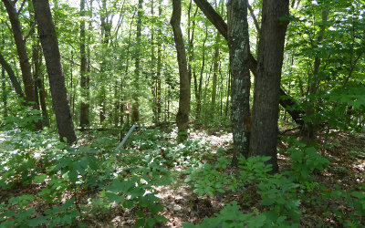 Blairsville Residential Lots & Land For Sale: Lt 1 Trail Tree Drive