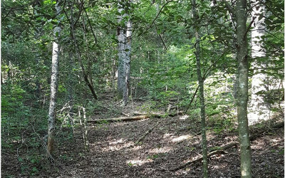 Blairsville Residential Lots & Land For Sale: 2+ Ac My Creek Rd