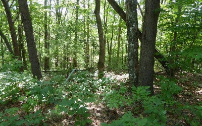 Blairsville Residential Lots & Land For Sale: Lot 2 Trail Tree