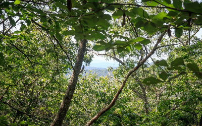 Ellijay Residential Lots & Land For Sale: 77acs Pleasant Hill Trail