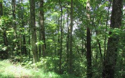 Ellijay Residential Lots & Land For Sale: 313 Jeff Drive