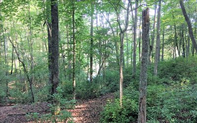 Blairsville Residential Lots & Land For Sale: Lt 15 Nottley Falls