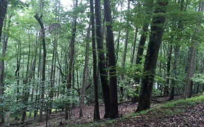 Blairsville Residential Lots & Land For Sale: Lt102 Badger Road