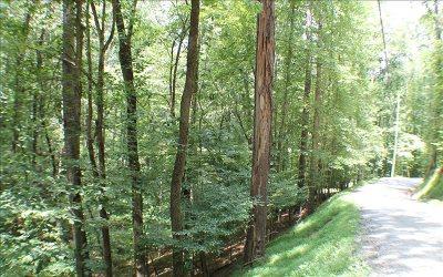 Ellijay Residential Lots & Land For Sale: 440-441 Beaver Bend