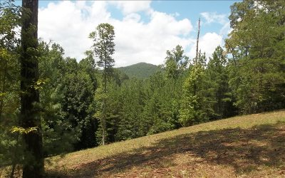 Blairsville Residential Lots & Land For Sale: Lot14 Hillside At Ivy Log