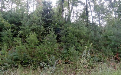 Blairsville Residential Lots & Land For Sale: Lt 11 Lower Fox Trail