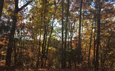 Ellijay Residential Lots & Land For Sale: Lt 34 Amy Creek Circle