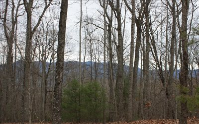 Blairsville Residential Lots & Land For Sale: Lot S Moon Shadow View N