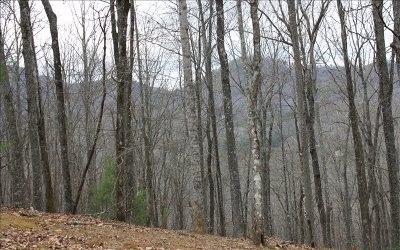 Blairsville Residential Lots & Land For Sale: Lot T Moon Shadow View N