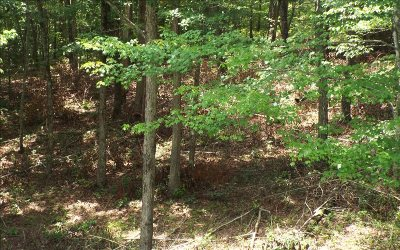 Ellijay Residential Lots & Land For Sale: Lot#2 Hawk Trail