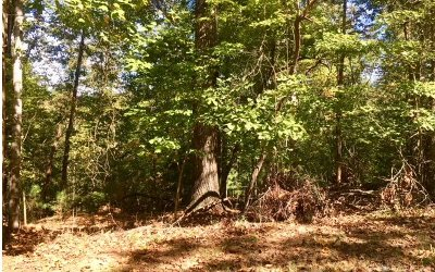 Ellijay Residential Lots & Land For Sale: 580 Acacia Court