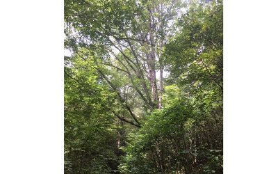 Murphy NC Residential Lots & Land For Sale: $22,210