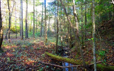 Ellijay Residential Lots & Land For Sale: Riggs Rd.