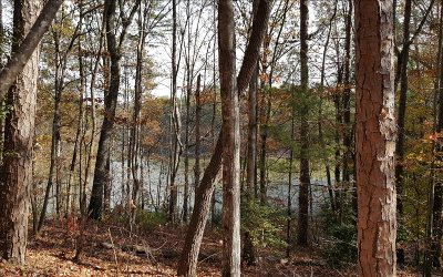 Ellijay Residential Lots & Land For Sale: Lt 31 Mountiantown Heights