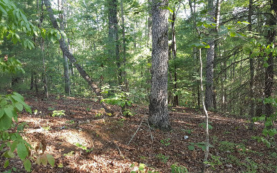 Ellijay Residential Lots & Land For Sale: Lt 19 Mountiantown Heights